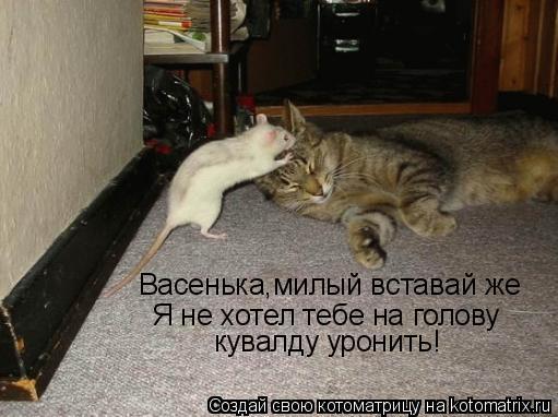 Котоматрица: Васенька,милый вставай же Я не хотел тебе на голову  кувалду уронить!