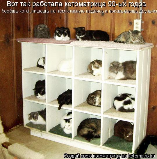 Котоматрица: Вот так работала котоматрица 50-ых годов берёшь кота ,пишешь на нём класную надпись и показываешь друзьям