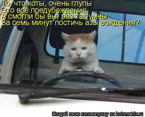 Котоматрица: То, что коты, очень глупы Это всё предубеждение А смогли бы вы, раз так умны За семь минут постичь азы вождения?