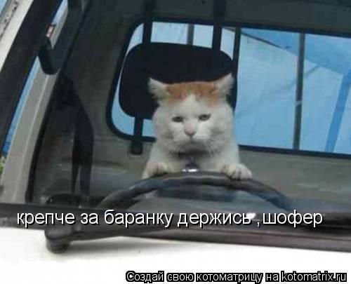 Котоматрица: крепче за баранку держись ,шофер