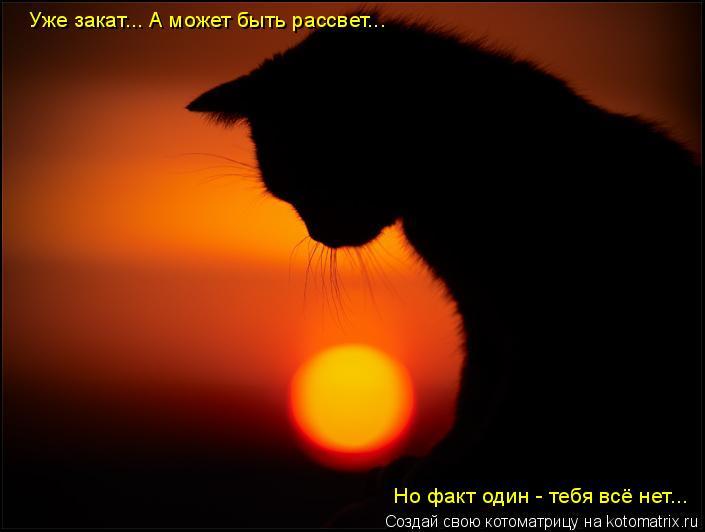 Котоматрица: Уже закат... А может быть рассвет... Но факт один - тебя всё нет...