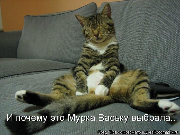 Котоматрица: И почему это Мурка Ваську выбрала...