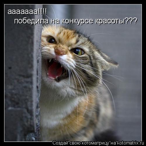Котоматрица: ааааааа!!!!  победила на конкурсе красоты???