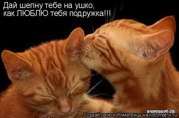 Котоматрица: Дай шепну тебе на ушко, как ЛЮБЛЮ тебя подружка!!!