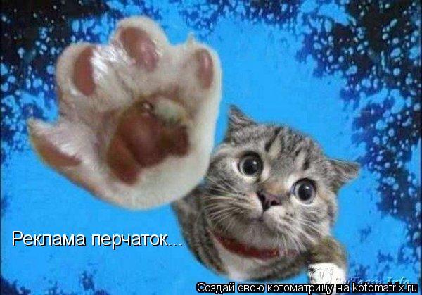 Котоматрица: Реклама перчаток...