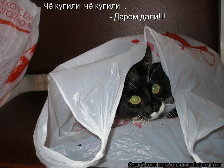 Котоматрица: Чё купили, чё купили...  - Даром дали!!!