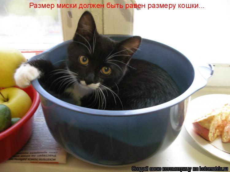 Котоматрица: Размер миски должен быть равен размеру кошки...