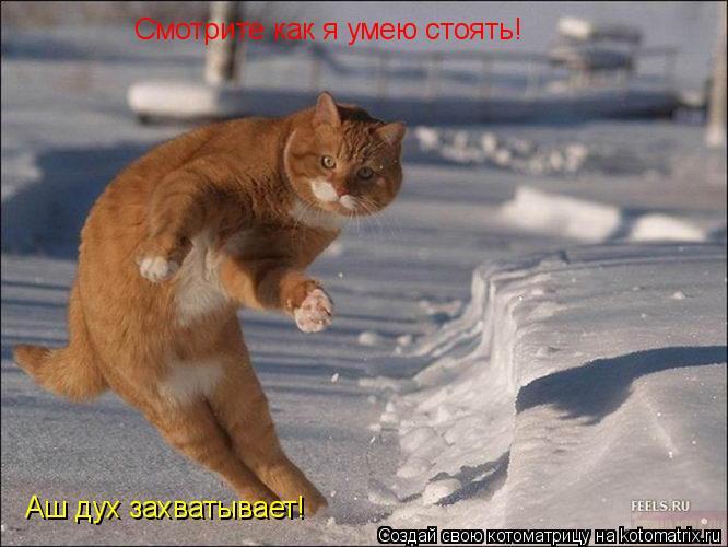 Котоматрица: Смотрите как я умею стоять! Аш дух захватывает! Смотрите как я умею стоять!  Аш дух захватывает!