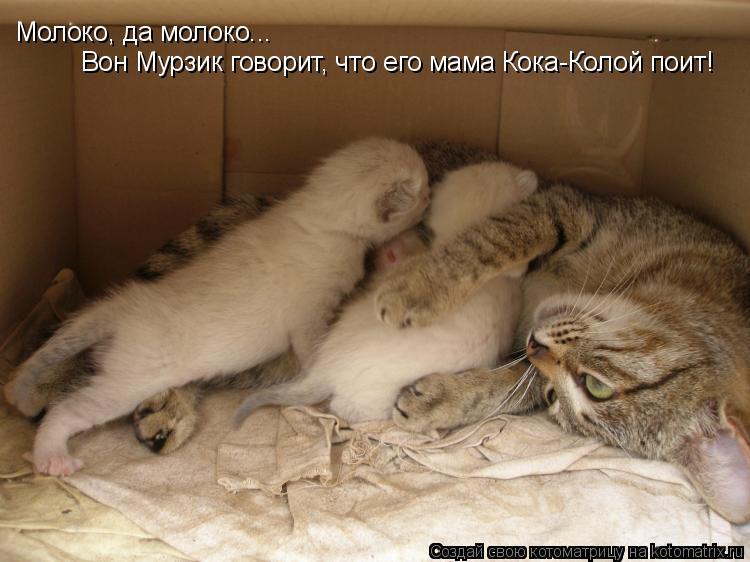 Котоматрица: Молоко, да молоко...  Вон Мурзик говорит, что его мама Кока-Колой поит!