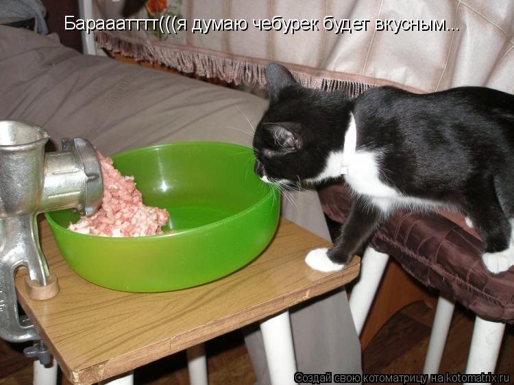 Котоматрица: Барааатттт(((я думаю чебурек будет вкусным...