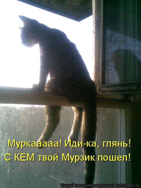Котоматрица: Муркааааа! Иди-ка, глянь! С КЕМ твой Мурзик пошел!