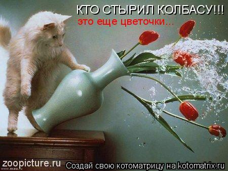Котоматрица: КТО СТЫРИЛ КОЛБАСУ!!! это еще цветочки...