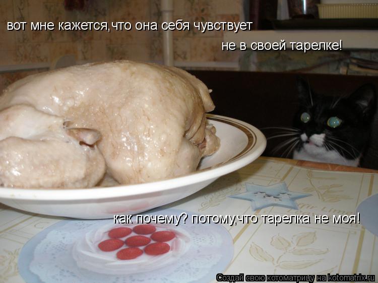 Котоматрица: вот мне кажется,что она себя чувствует не в своей тарелке! как почему? потому,что тарелка не моя!