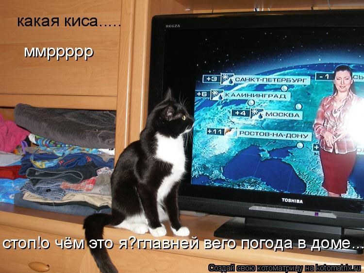 Котоматрица: какая киса..... стоп!о чём это я?главней вего погода в доме...  ммррррр