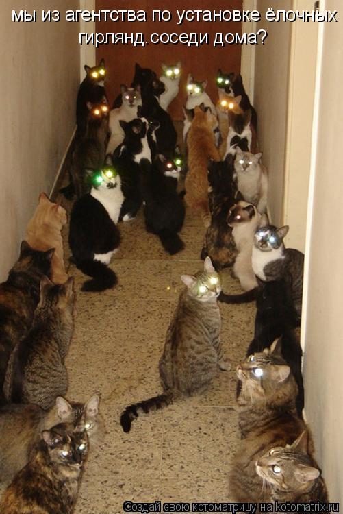 Котоматрица: мы из агентства по установке ёлочных гирлянд ваши соседи дома? мы из агентства по установке ёлочных гирлянд.соседи дома?