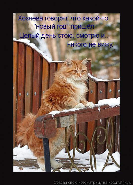 """Котоматрица: Хозяева говорят, что какой-то  Целый день стою, смотрю и... """"новый год"""" пришёл. никого не вижу."""