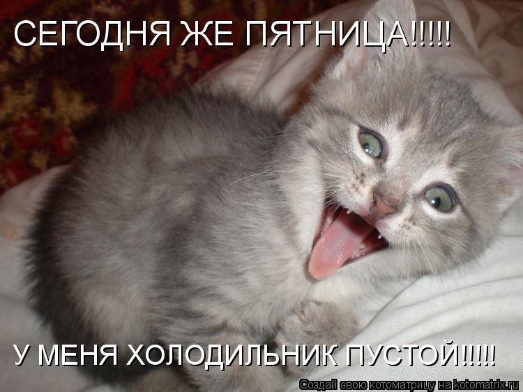 Котоматрица: СЕГОДНЯ ЖЕ ПЯТНИЦА!!!!! У МЕНЯ ХОЛОДИЛЬНИК ПУСТОЙ!!!!!