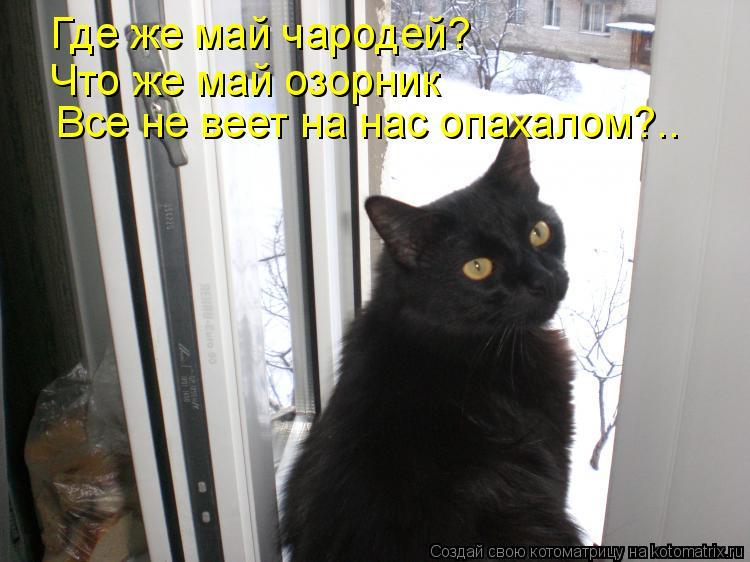 Котоматрица: Где же май чародей?  Что же май озорник Все не веет на нас опахалом?..