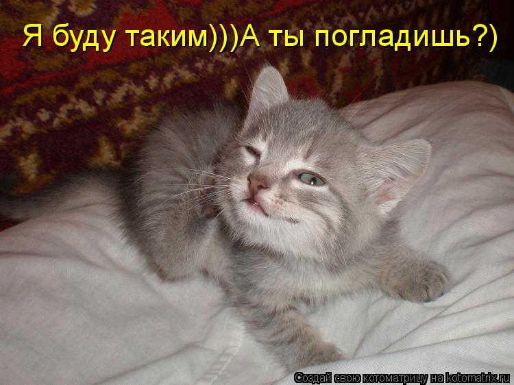 Котоматрица: Я буду таким)))А ты погладишь?)