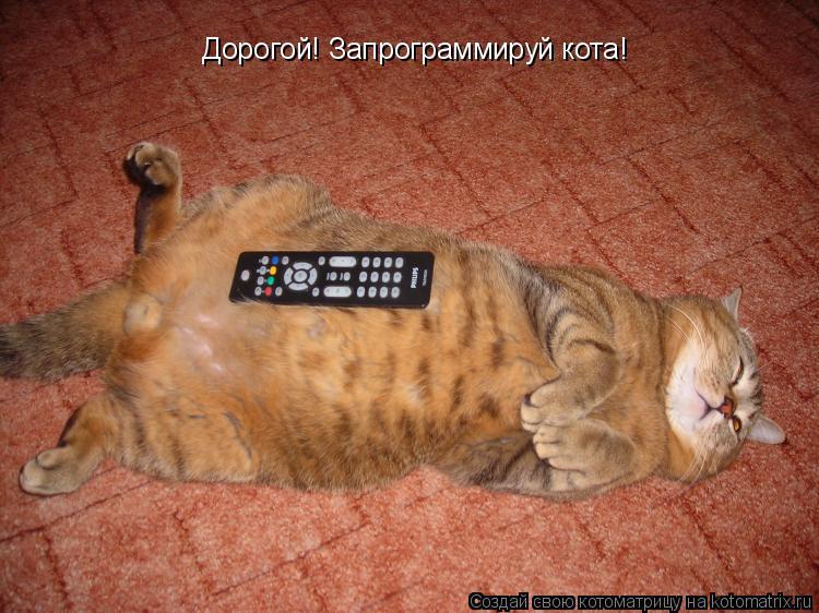 Котоматрица: Дорогой! Запрограммируй кота!