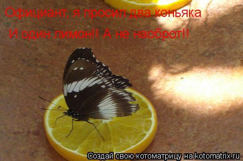 Котоматрица: Официант, я просил два коньяка   И один лимон!! А не наоброт!!