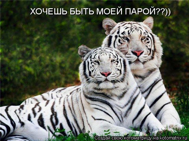 Котоматрица: ХОЧЕШЬ БЫТЬ МОЕЙ ПАРОЙ??))