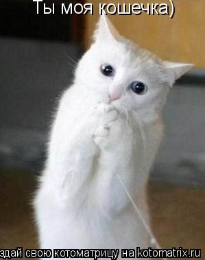 Котоматрица: Ты моя кошечка)