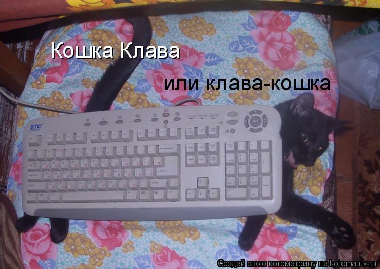 Котоматрица: Кошка Клава или клава-кошка