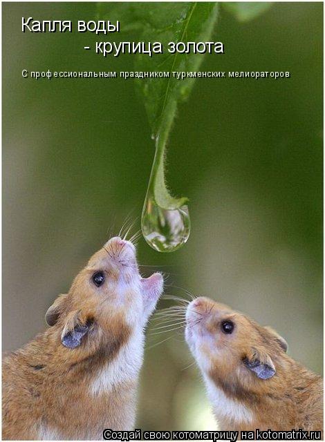 Котоматрица: Капля воды - крупица золота С профессиональным праздником туркменских мелиораторов