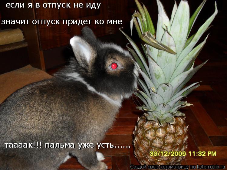 Котоматрица: если я в отпуск не иду значит отпуск придет ко мне таааак!!! пальма уже усть......