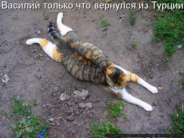 Котоматрица: Василий только что вернулся из Турции.