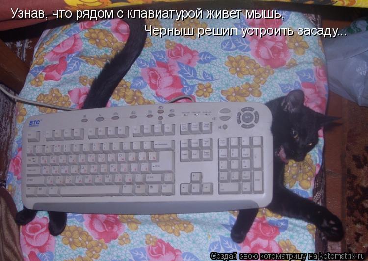 Котоматрица: Узнав, что рядом с клавиатурой живет мышь, Черныш решил устроить засаду...