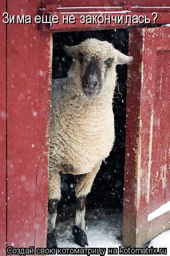 Котоматрица: Зима еще не закончилась?