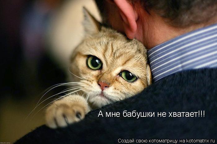 Котоматрица: А мне бабушки не хватает!!!