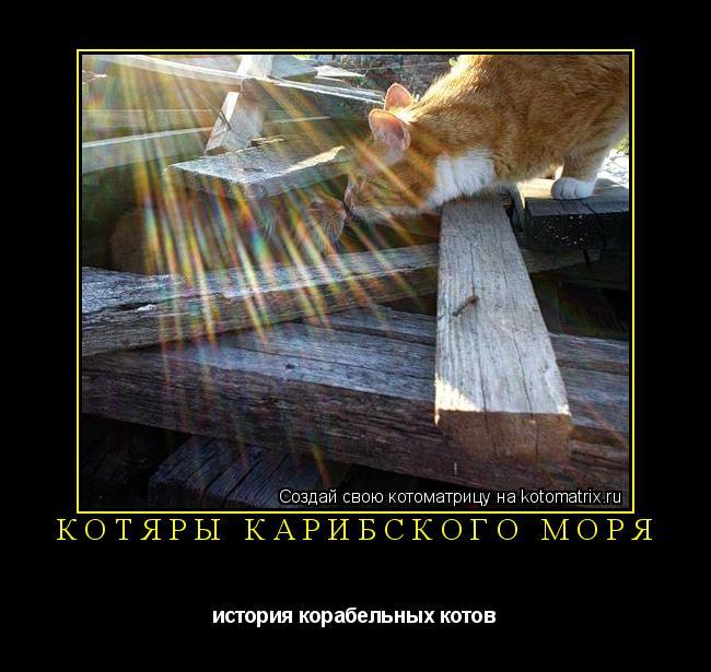 Котоматрица: Котяры Карибского моря история корабельных котов