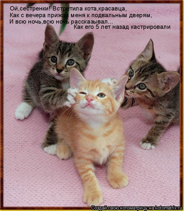 Котоматрица: Ой,сестренки! Встретила кота,красавца, Как с вечера прижал меня к подвальным дверям, И всю ночь,всю ночь рассказывал... Как его 5 лет назад кас