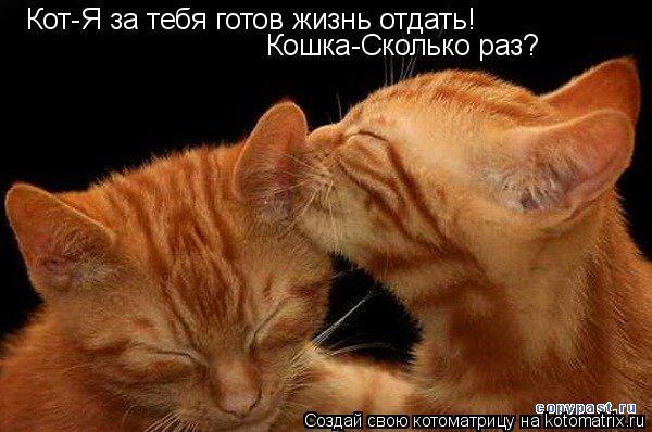 Котоматрица: Кот-Я за тебя готов жизнь отдать! Кошка-Сколько раз?
