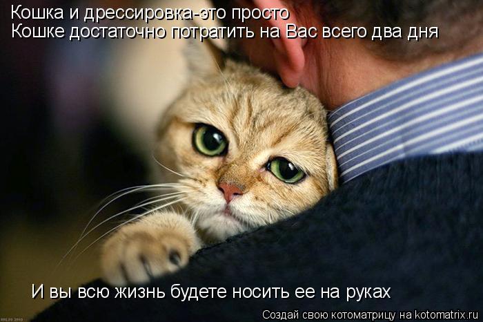 Котоматрица: Кошка и дрессировка-это просто Кошке достаточно потратить на Вас всего два дня И вы всю жизнь будете носить ее на руках