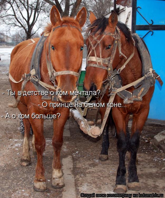 Котоматрица: - Ты в детстве о ком мечтала?  - О принце на белом коне... - А о ком больше?