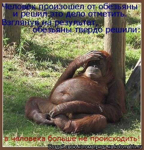 Котоматрица: Человек произошел от обезьяны и решил это дело отметить.  Взглянув на результат,  обезьяны твердо решили:  в человека больше не происходить!