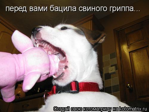 Котоматрица: перед вами бацила свиного гриппа...