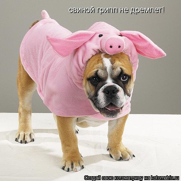 Котоматрица: свиной грипп не дремлет!
