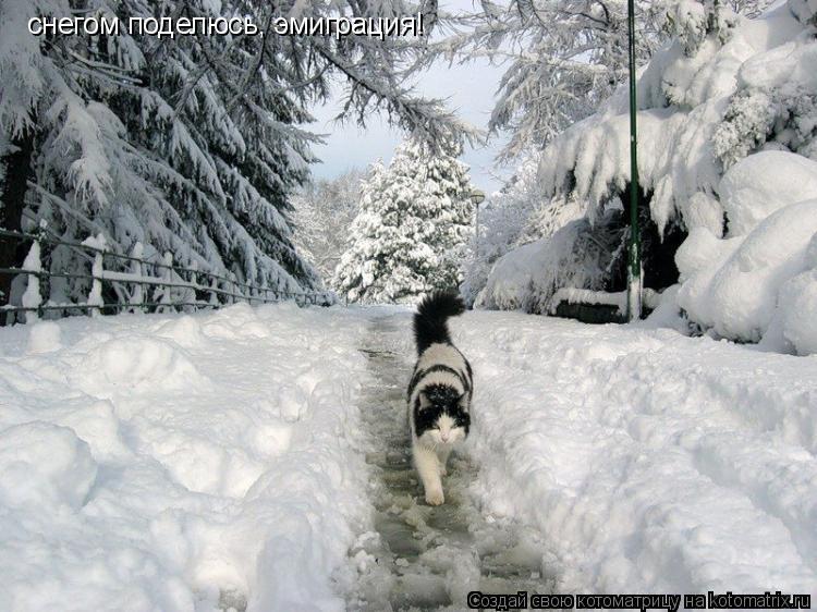 Котоматрица: снегом поделюсь, эмиграция!