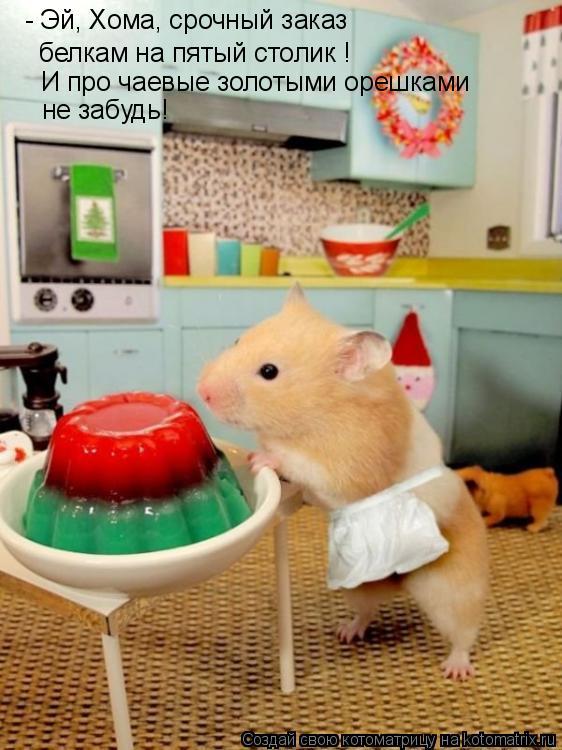 Котоматрица: - Эй, Хома, срочный заказ  белкам на пятый столик ! И про чаевые золотыми орешками  не забудь!