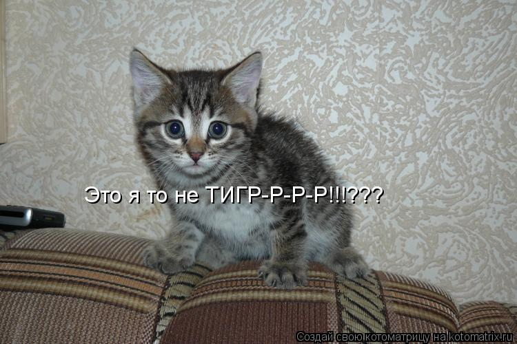 Котоматрица: Это я то не ТИГР-Р-Р-Р!!!???
