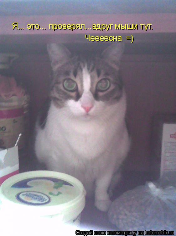 Котоматрица: Я... это... проверял...вдруг мыши тут. =) Чеееесна