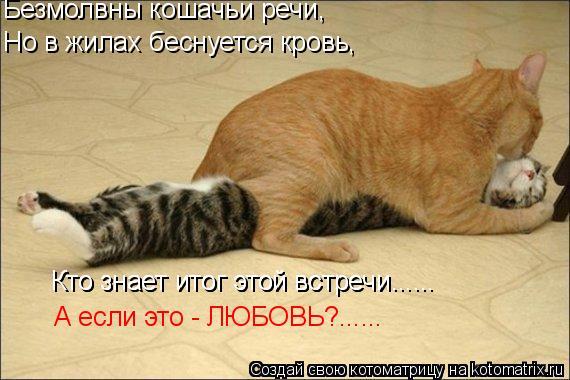 Котоматрица: Безмолвны кошачьи речи, Но в жилах беснуется кровь, Кто знает итог этой встречи...... Кто знает итог этой встречи...... А если это - ЛЮБОВЬ?......