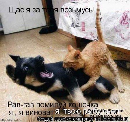 Котоматрица: Щас я за тебя возьмусь! Рав-гав помилуй кошечка я , я виноват я  твою рыбу сьел