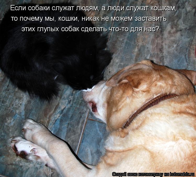 Котоматрица: Если собаки служат людям, а люди служат кошкам, то почему мы, кошки, никак не можем заставить   этих глупых собак сделать что-то для нас?