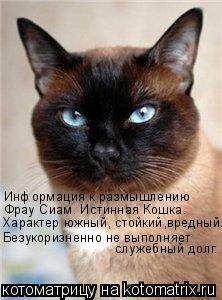 Котоматрица: Информация к размышлению Фрау Сиам. Истинная Кошка.  Характер южный, стойкий,вредный. Безукоризненно не выполняет  служебный долг.